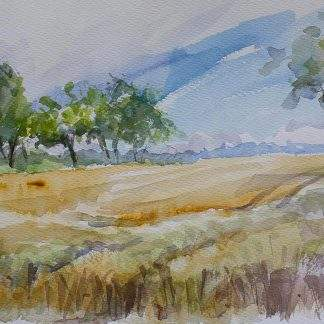 Fields Of Gold In Watercolour