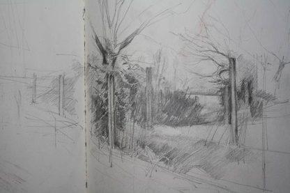 Pencil Study Clarendon