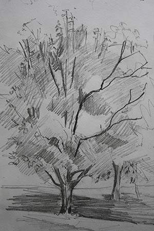 Study Of An Elm Pencil